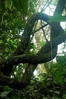 Amazonie-perou-fauna