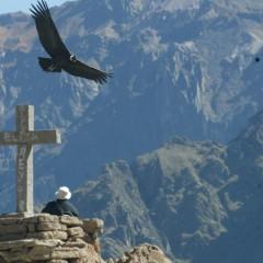 Canyon du Colca :  Les plus grands oiseaux dans le canyon le plus profond du monde