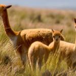 Voyager au Pérou selon vos passions