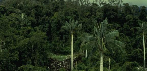 Parc National de Cutervo
