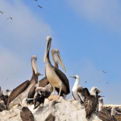 La réserve nationale de Paracas